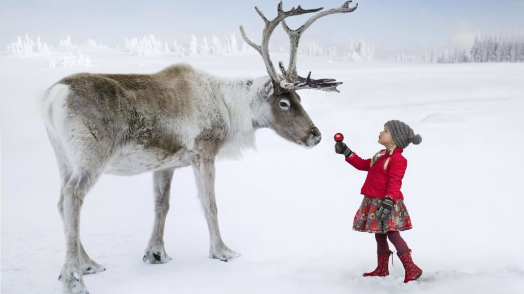 Reindeer love to eat Apples !