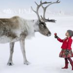 Reindeer to visit Albion Orchards Saturday December 10